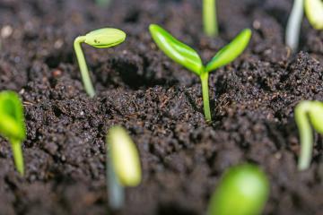 Diversificazione delle aziende agricole, annualità 2016