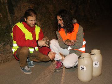 WWF. A Pontassieve cerca volontari per il progetto SOS anfibi