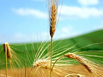 Sostegno a investimenti nelle aziende agricole, annualità 2016