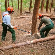 Centro formazione forestale Rincine - Calendario corsi 2021