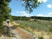 80 km da Firenze al Falterona
